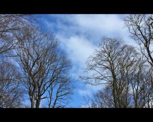 Die Eichen tanzen im Wind – eine Minute für dich
