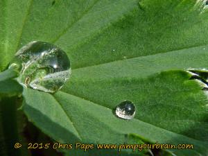 Wasser ernährt nicht nur die Pflanzen